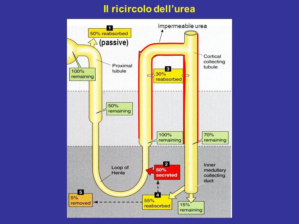 Il ricircolo dellurea (passive) Impermeabile urea
