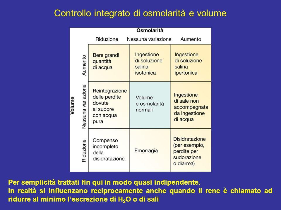 Controllo integrato di osmolarità e volume Per semplicità trattati fin qui in modo quasi indipendente. In realtà si influenzano reciprocamente anche q