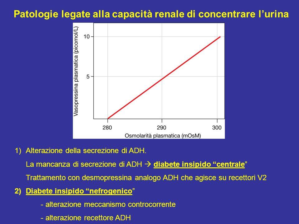 1)Alterazione della secrezione di ADH. La mancanza di secrezione di ADH diabete insipido centrale Trattamento con desmopressina analogo ADH che agisce