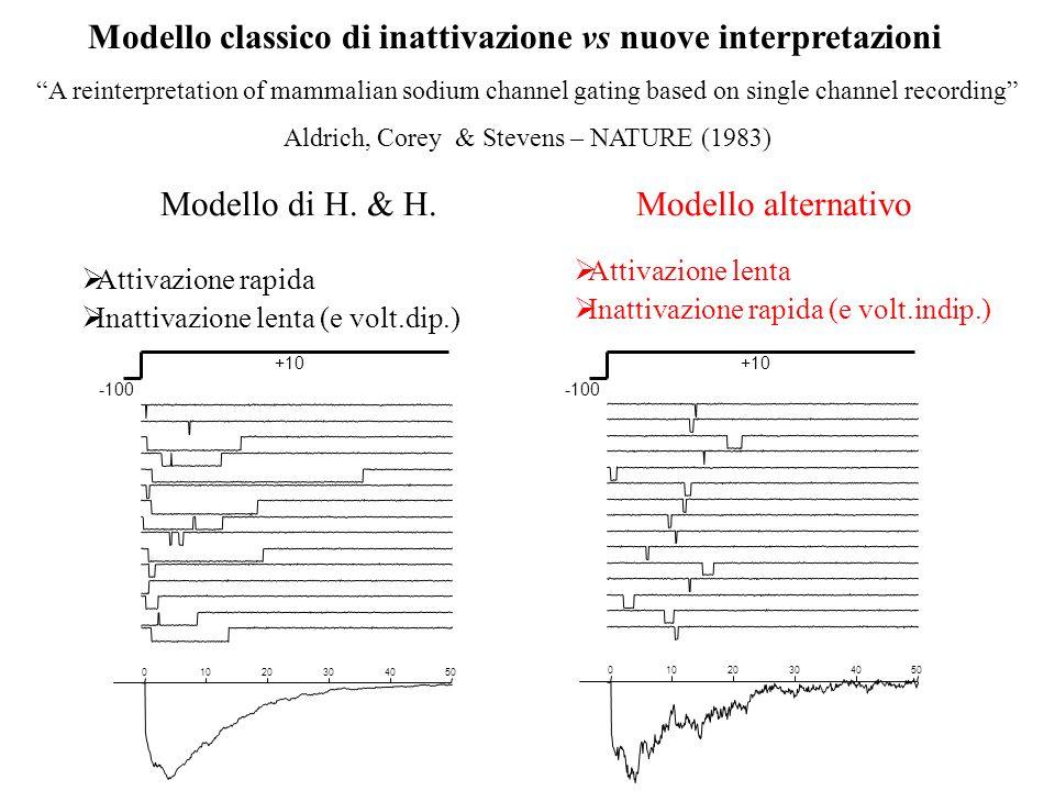 Modello classico di inattivazione vs nuove interpretazioni 01020304050 01020304050 Modello di H. & H. Attivazione rapida Inattivazione lenta (e volt.d