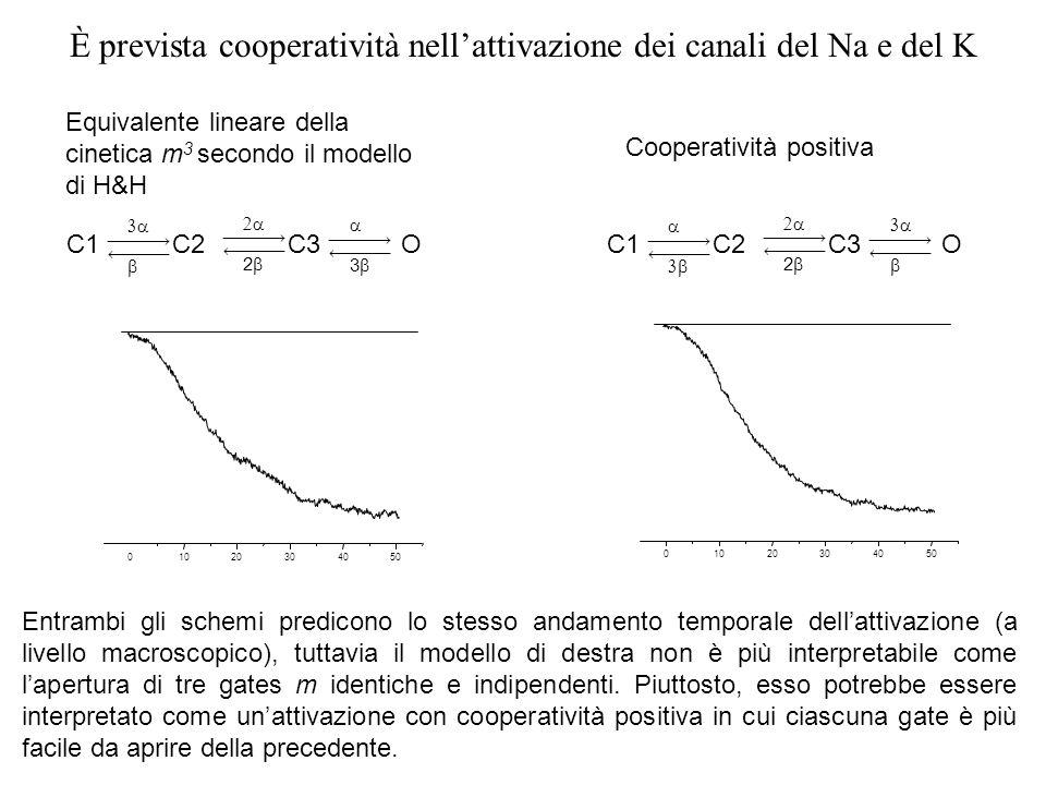 01020304050 01020304050 C1 3 O C2C3 2 Equivalente lineare della cinetica m 3 secondo il modello di H&H Entrambi gli schemi predicono lo stesso andamen