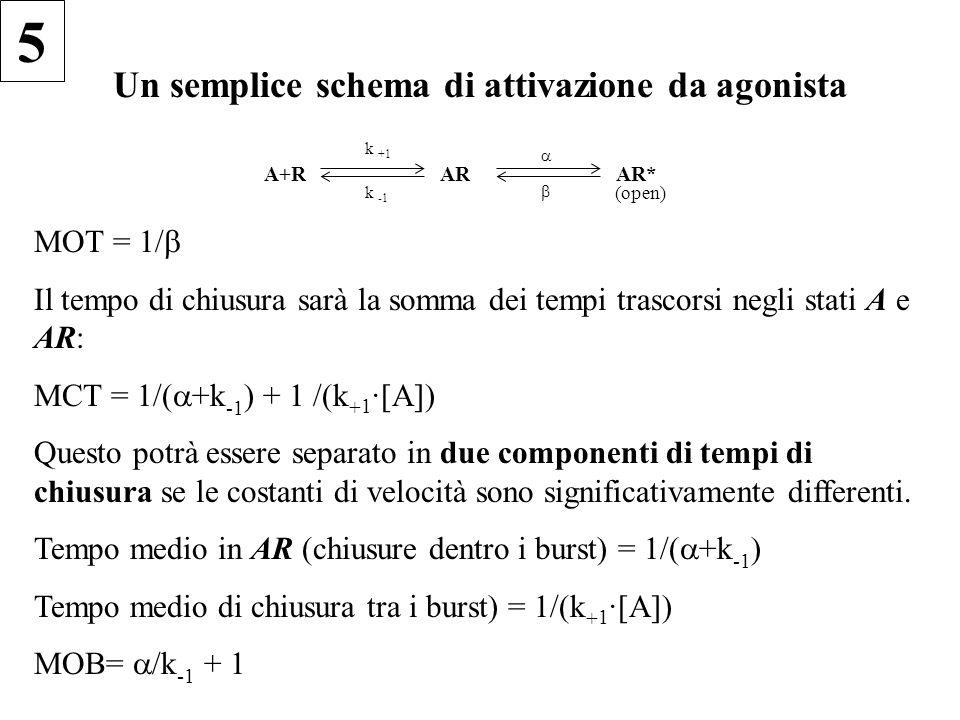 Un semplice schema di attivazione da agonista A+R k +1 k -1 AR AR* (open) MOT = 1/ Il tempo di chiusura sarà la somma dei tempi trascorsi negli stati