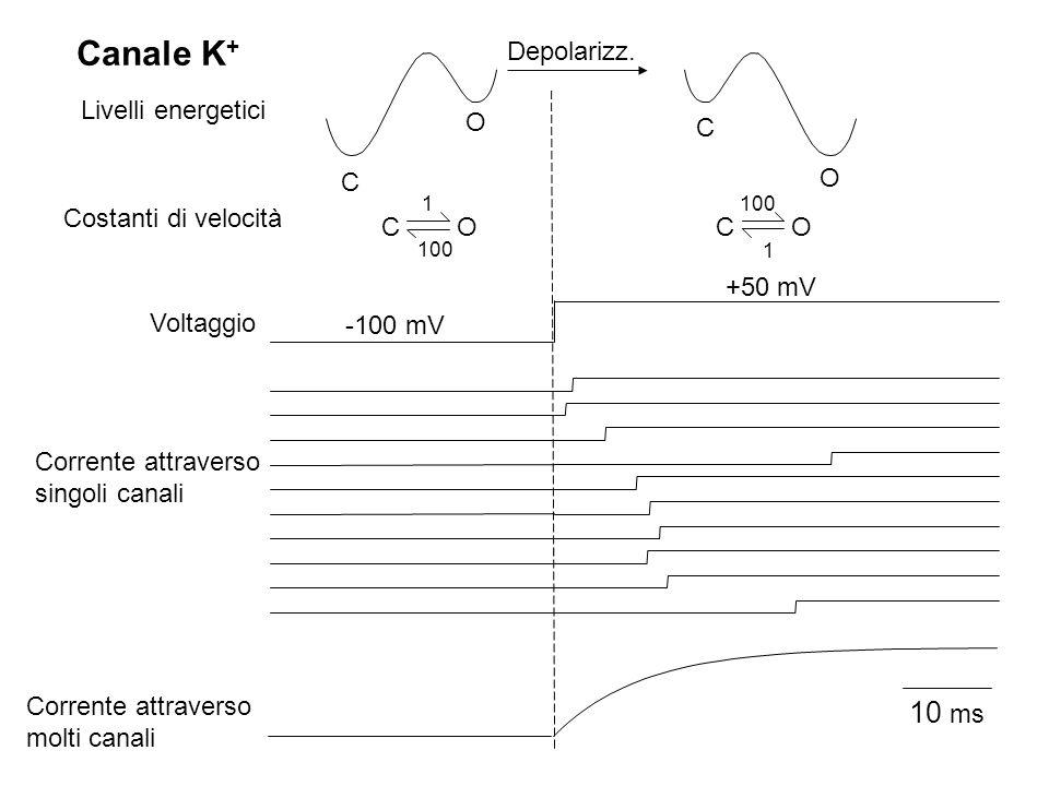 C O O C COCO 1 100 1 Voltaggio Livelli energetici Costanti di velocità Corrente attraverso singoli canali 10 ms Corrente attraverso molti canali Canal