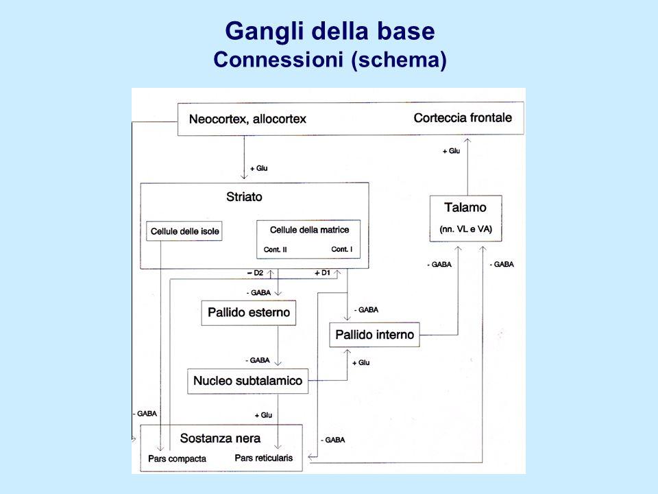 Gangli della base Connessioni (schema)