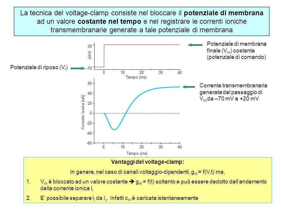 010203040 -70 20 (mV) Tempo (ms) 010203040 -60 -40 -20 0 20 40 60 Corrente ionica (nA) Tempo (ms) La tecnica del voltage-clamp consiste nel bloccare i