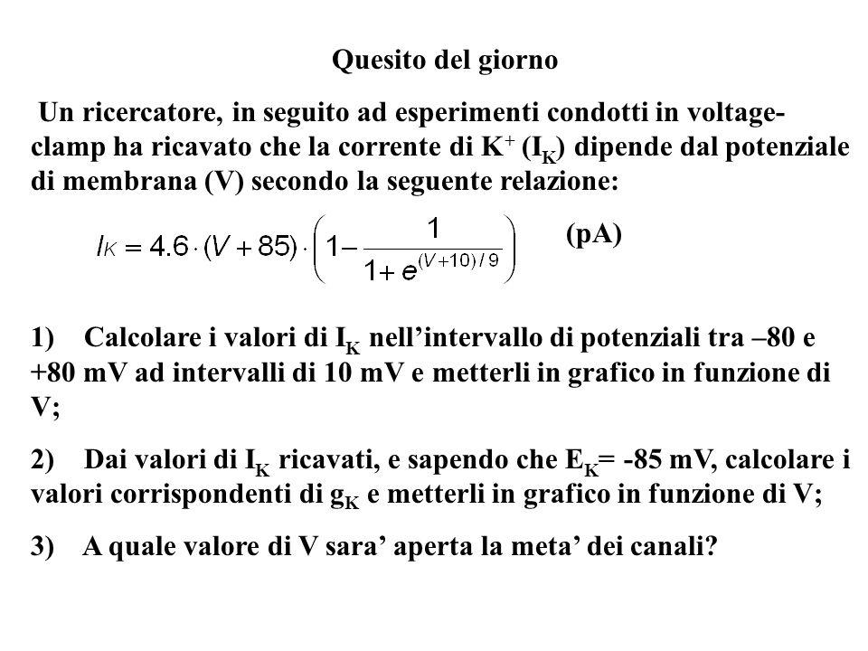 Quesito del giorno Un ricercatore, in seguito ad esperimenti condotti in voltage- clamp ha ricavato che la corrente di K + (I K ) dipende dal potenzia