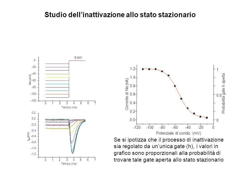 012 34567 -120 -100 -80 -60 -40 -20 0 V m ( m V ) Tempo (ms) Studio dellinattivazione allo stato stazionario -1.2 -0.8 -0.6 -0.4 -0.2 0.0 0.2 I N a (