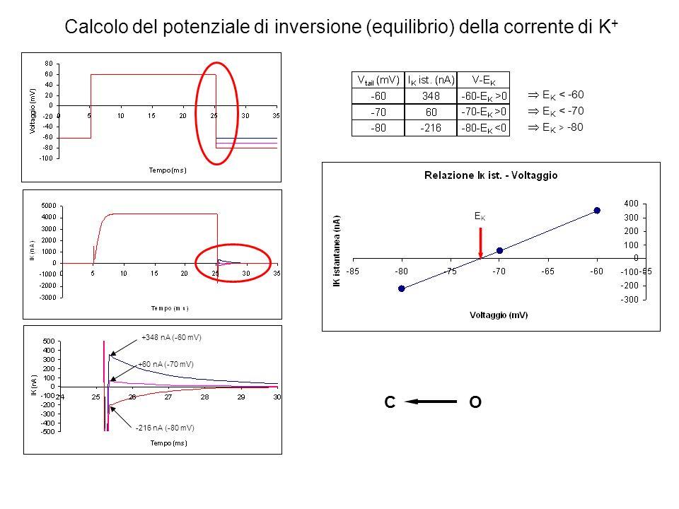 +348 nA (-60 mV) +60 nA (-70 mV) -216 nA (-80 mV) EKEK Calcolo del potenziale di inversione (equilibrio) della corrente di K + CO E K < -60 E K < -70
