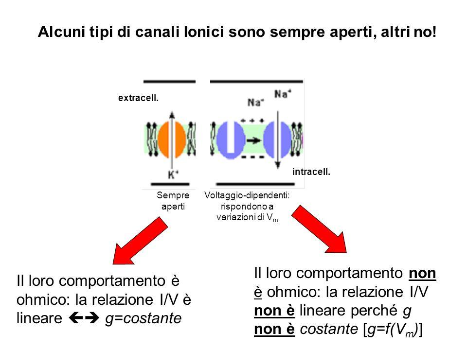 Sempre aperti extracell. Voltaggio-dipendenti: rispondono a variazioni di V m intracell. Alcuni tipi di canali Ionici sono sempre aperti, altri no! Il