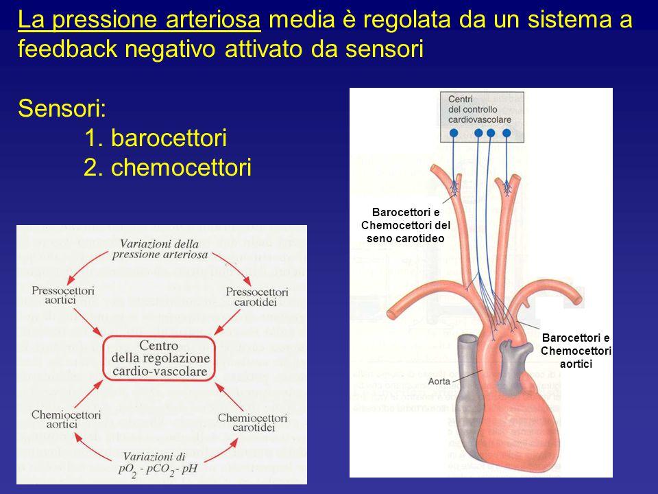 La pressione arteriosa media è regolata da un sistema a feedback negativo attivato da sensori Sensori: 1. barocettori 2. chemocettori Barocettori e Ch