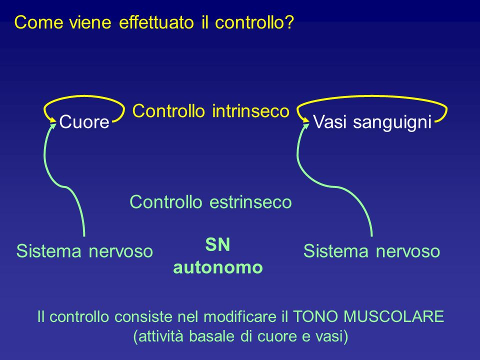 Come viene effettuato il controllo? SN autonomo Cuore Controllo intrinseco Vasi sanguigni Sistema nervoso Controllo estrinseco Sistema nervoso Il cont