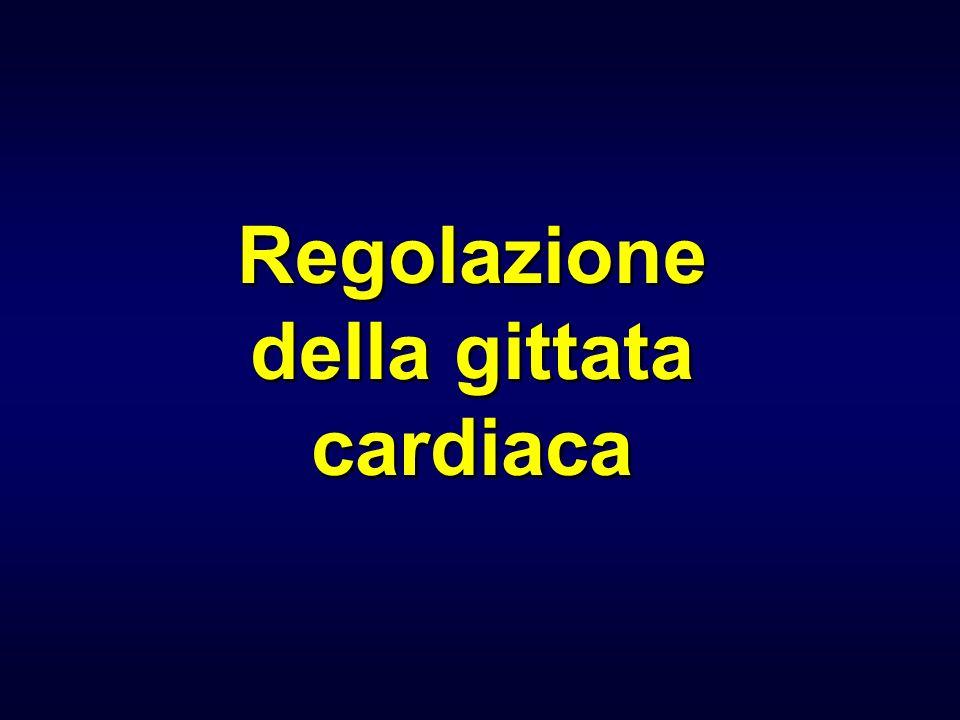 Innervazione ortosimpatica del cuore Fibre post-gangliari dei nervi cervicali ORIGINE: corna laterali midollo toracico (T 1 -T 5 ) AZIONE: eccitatoria MEDIATORE: noradrenalina BERSAGLI: 1°: recettori 1 delle cellule pacemaker del nodo SA MECCANISMO: cAMP (I f e I Ca ) frequanza cardiaca (effetto cronotropo positivo) 2°: recettori 1 delle cellule pacemaker del nodo AV MECCANISMO: accelerazione della conduzione del potenziale dazione attraverso nodo AV e sistema di conduzione (effetto dromotropo positivo)