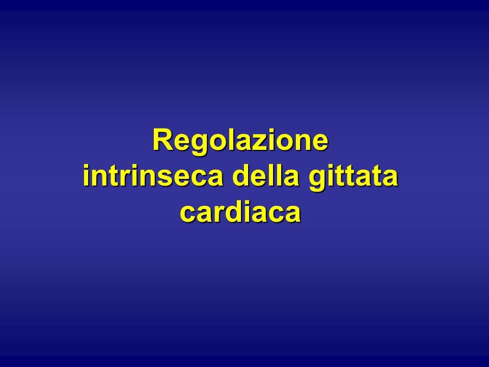 Se il cuore non potesse regolare intrinsecamente la gittata sistolica, un aumento della pressione venosa (e quindi del ritorno venoso allatrio ds) provocherebbe: Squilibrio tra afflusso ventricolare nella diastole e uscita ventricolare nella sistole.