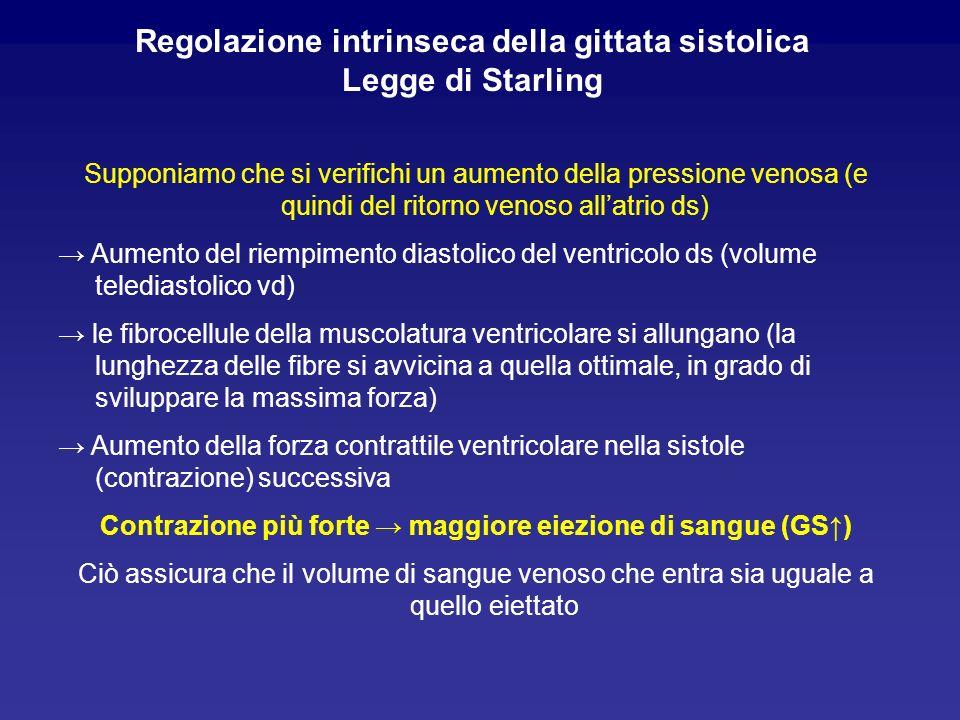 Analogamente, Supponiamo che si verifichi una diminuzione della pressione venosa (e quindi del ritorno venoso allatrio ds) Diminuzione del riempimento diastolico del ventricolo ds (volume telediastolico vd) le fibrocellule della muscolatura ventricolare si accorciano (la lunghezza delle fibre si allontana non solo da quella ottimale, in grado di sviluppare la massima forza, ma anche da quella normale di riposo) Diminzione della forza contrattile ventricolare nella sistole (contrazione) successiva Contrazione più debole minore eiezione di sangue (GS)