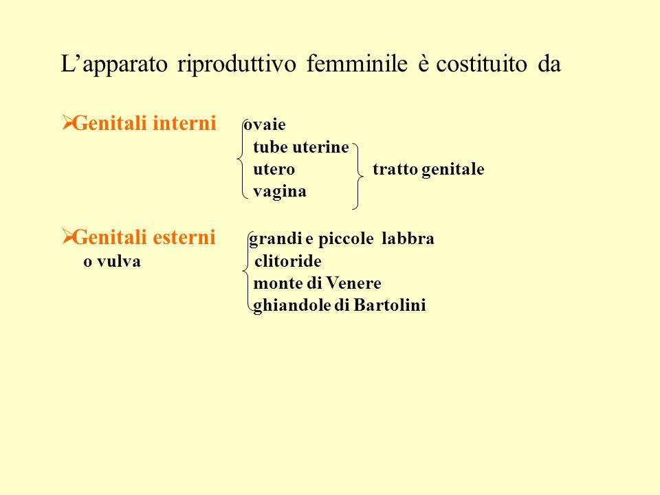 Lapparato riproduttivo femminile è costituito da Genitali interni ovaie tube uterine utero tratto genitale vagina Genitali esterni grandi e piccole labbra o vulva clitoride monte di Venere ghiandole di Bartolini