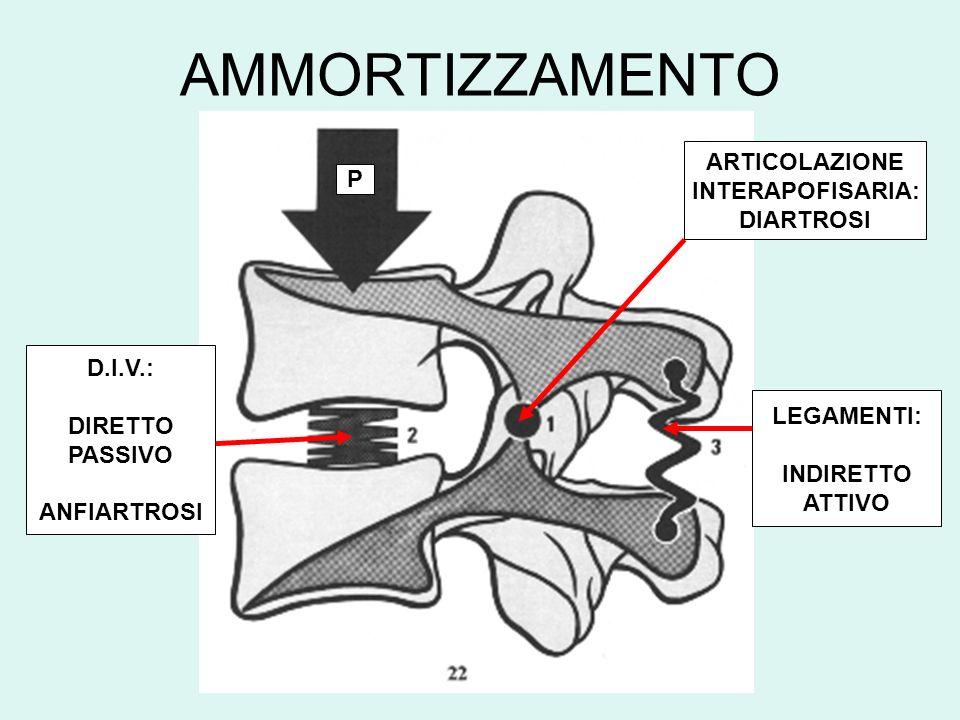 AMMORTIZZAMENTO D.I.V.: DIRETTO PASSIVO ANFIARTROSI LEGAMENTI: INDIRETTO ATTIVO P ARTICOLAZIONE INTERAPOFISARIA: DIARTROSI