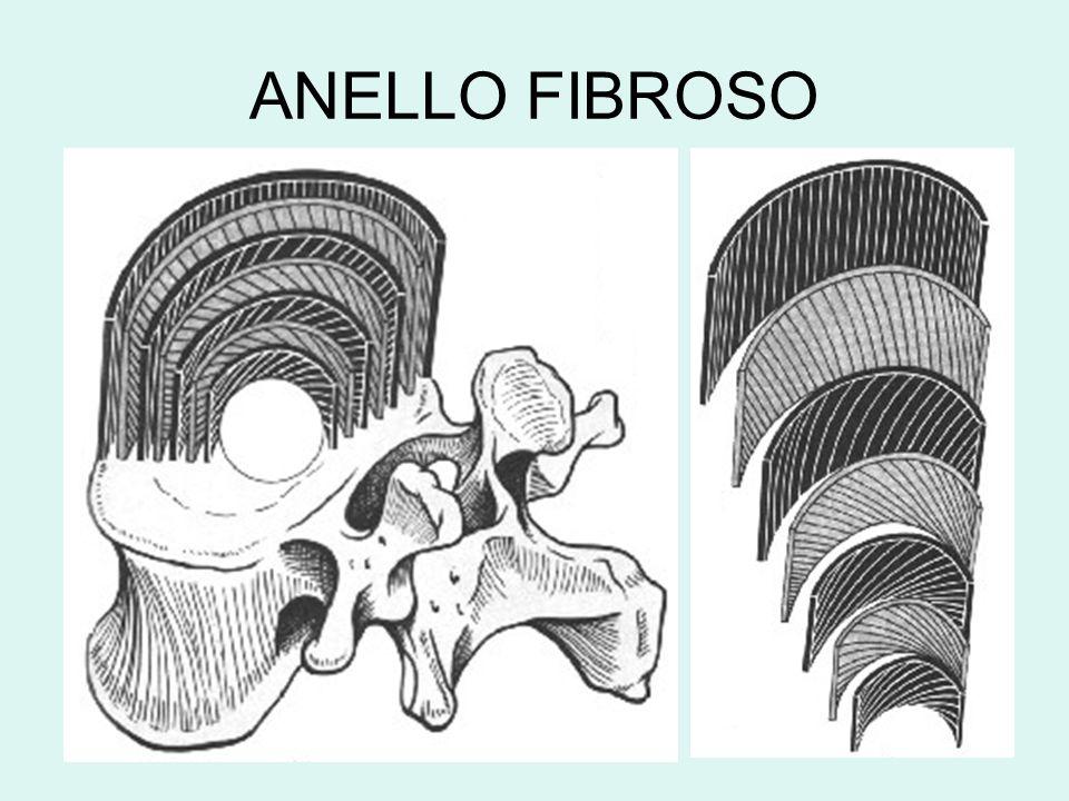 ANELLO FIBROSO