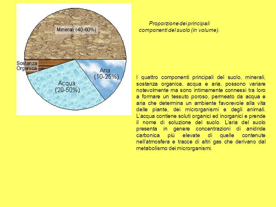 I Proporzione dei principali componenti del suolo (in volume). I quattro componenti principali del suolo, minerali, sostanza organica, acqua e aria, p