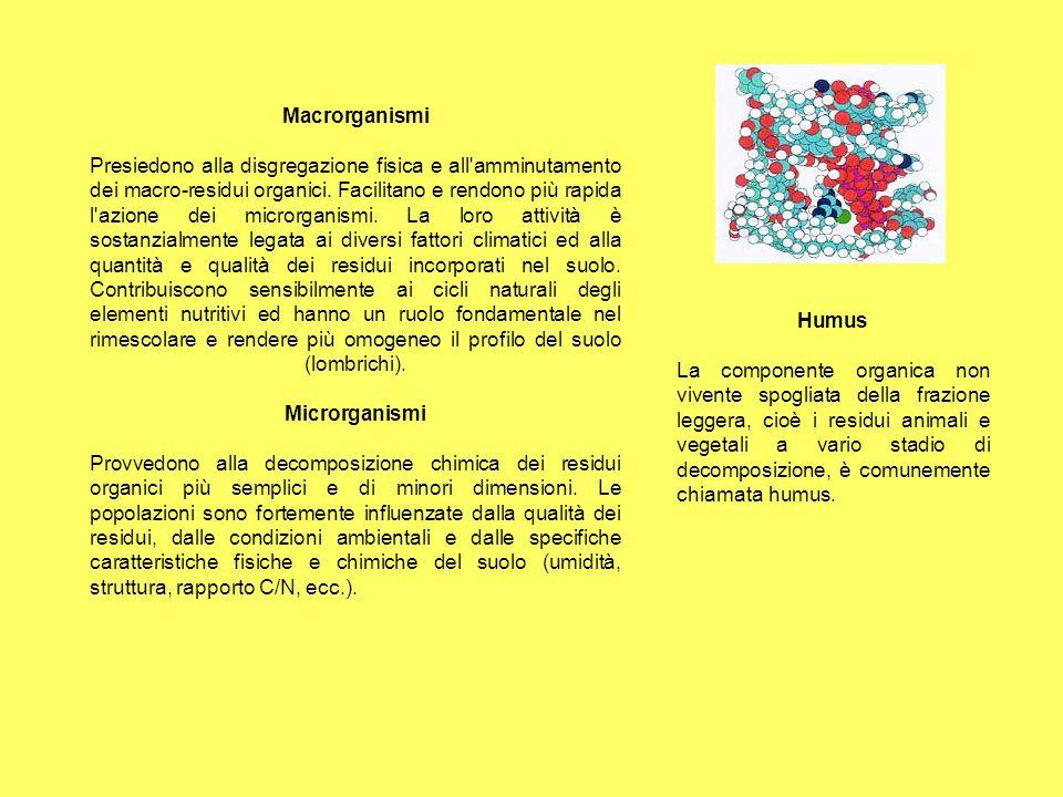Macrorganismi Presiedono alla disgregazione fisica e all'amminutamento dei macro-residui organici. Facilitano e rendono più rapida l'azione dei micror