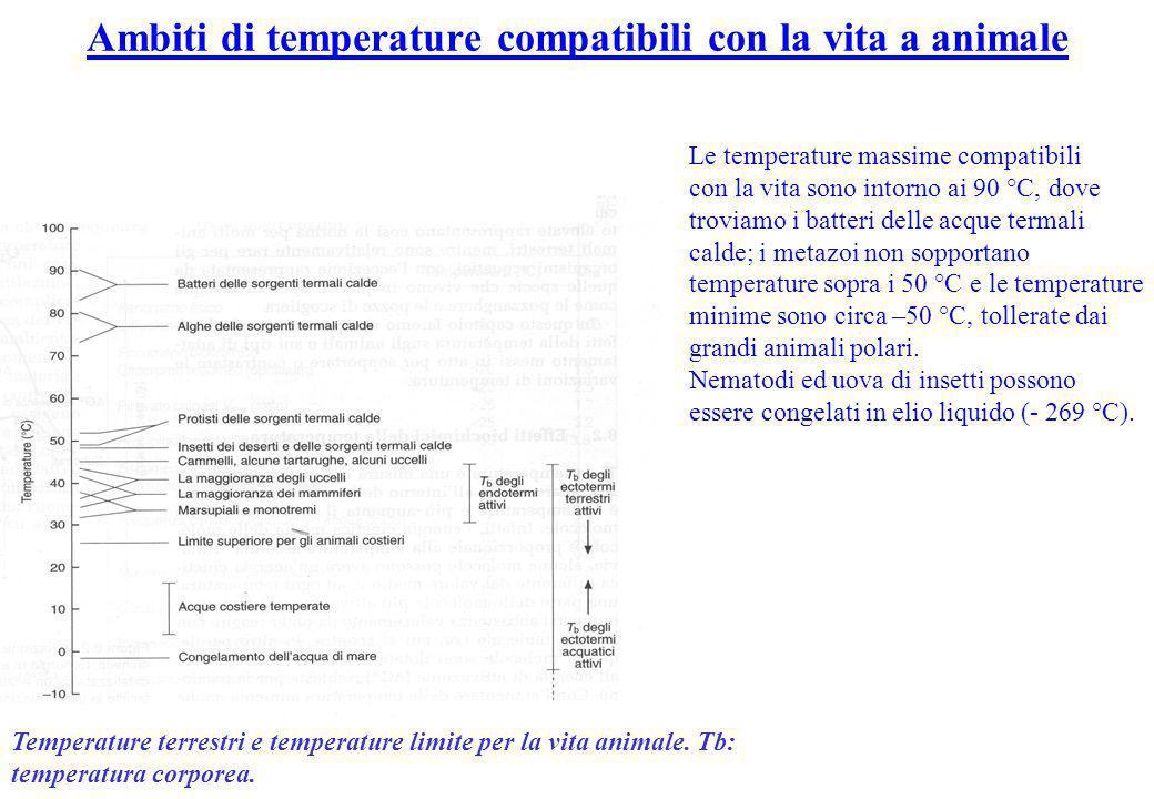 Ambiti di temperature compatibili con la vita a animale Le temperature massime compatibili con la vita sono intorno ai 90 °C, dove troviamo i batteri