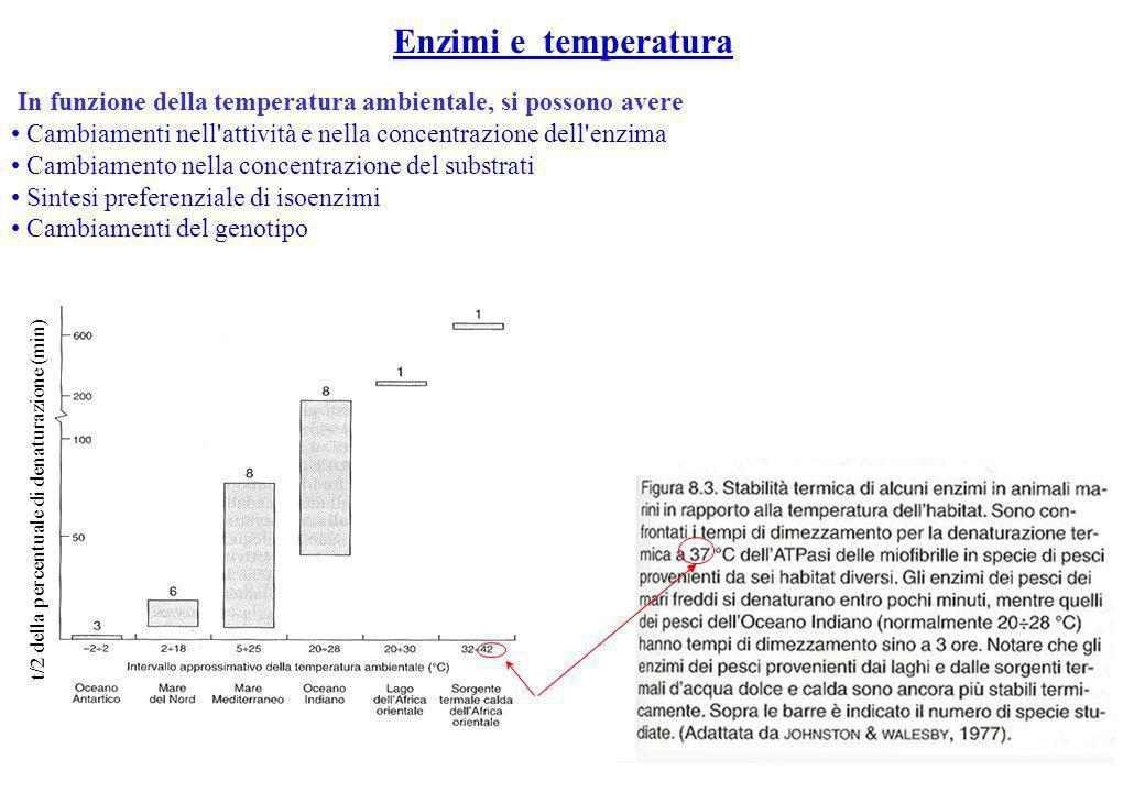 Enzimi e temperatura In funzione della temperatura ambientale, si possono avere Cambiamenti nell'attività e nella concentrazione dell'enzima Cambiamen