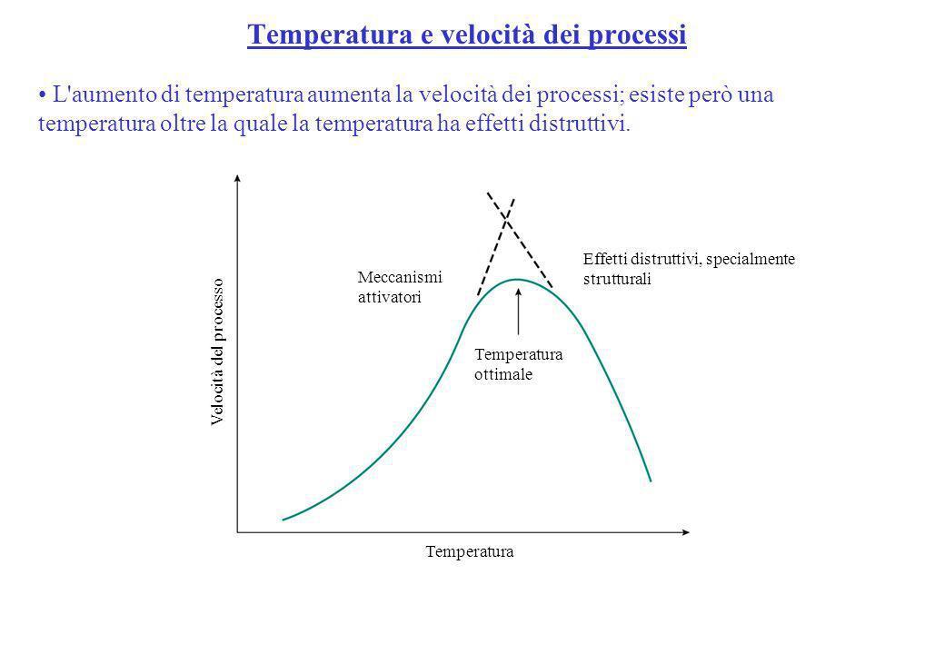 L'aumento di temperatura aumenta la velocità dei processi; esiste però una temperatura oltre la quale la temperatura ha effetti distruttivi. Velocità