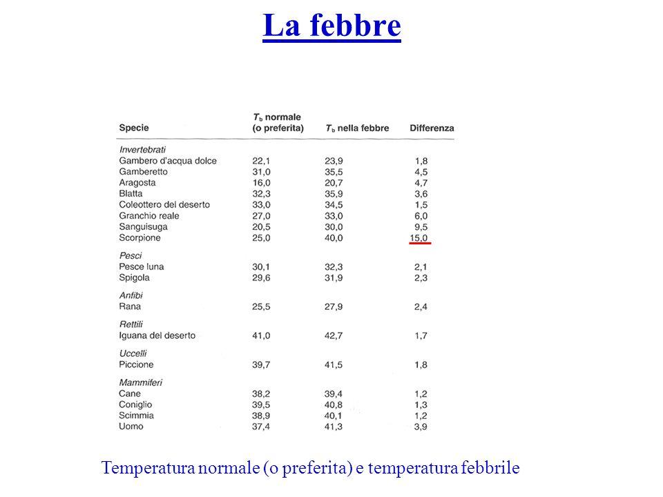 Temperatura normale (o preferita) e temperatura febbrile La febbre