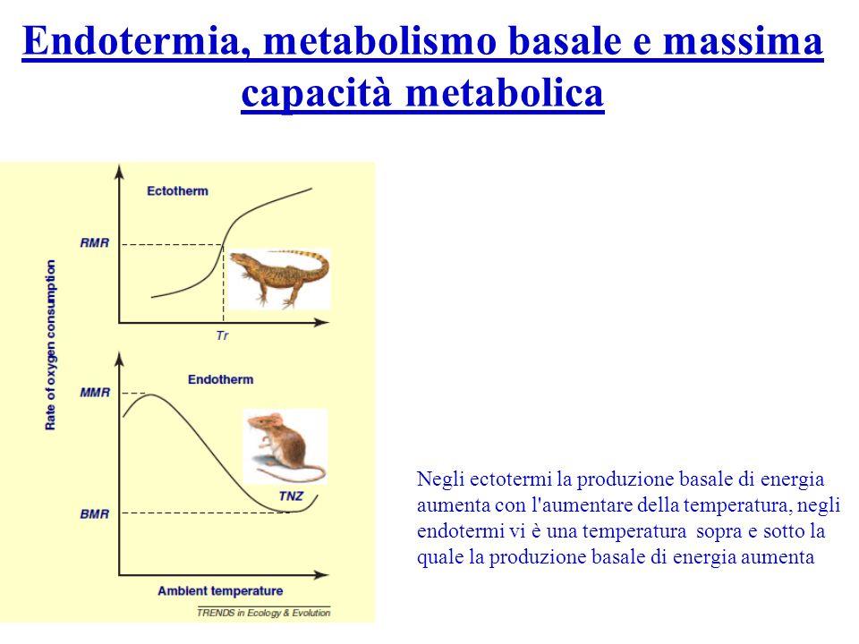 Endotermia, metabolismo basale e massima capacità metabolica Negli ectotermi la produzione basale di energia aumenta con l'aumentare della temperatura