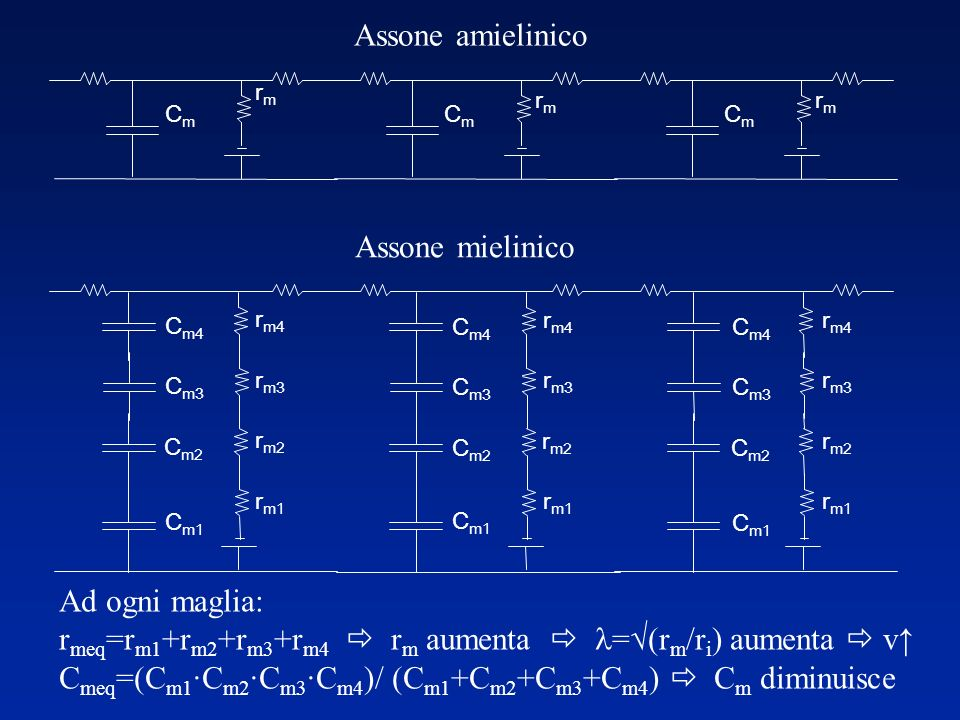 Perchèlamielinizzazioneècosìefficace? Propagazionepassiva = (r m /r a ) r a : Invariata rmrm :aumentata(resistoriinserie) Conduzionetransientemigliore