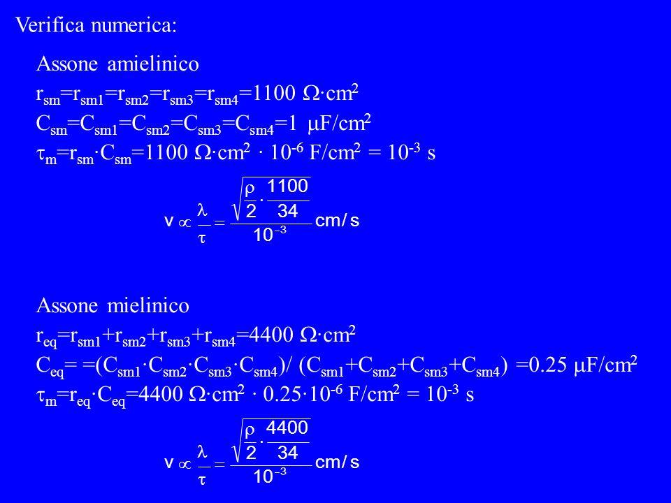 CmCm rmrm CmCm rmrm CmCm rmrm Ad ogni maglia: r meq =r m1 +r m2 +r m3 +r m4 r m aumenta =(r m /r i ) aumenta v C meq =(C m1 ·C m2 ·C m3 ·C m4 )/ (C m1