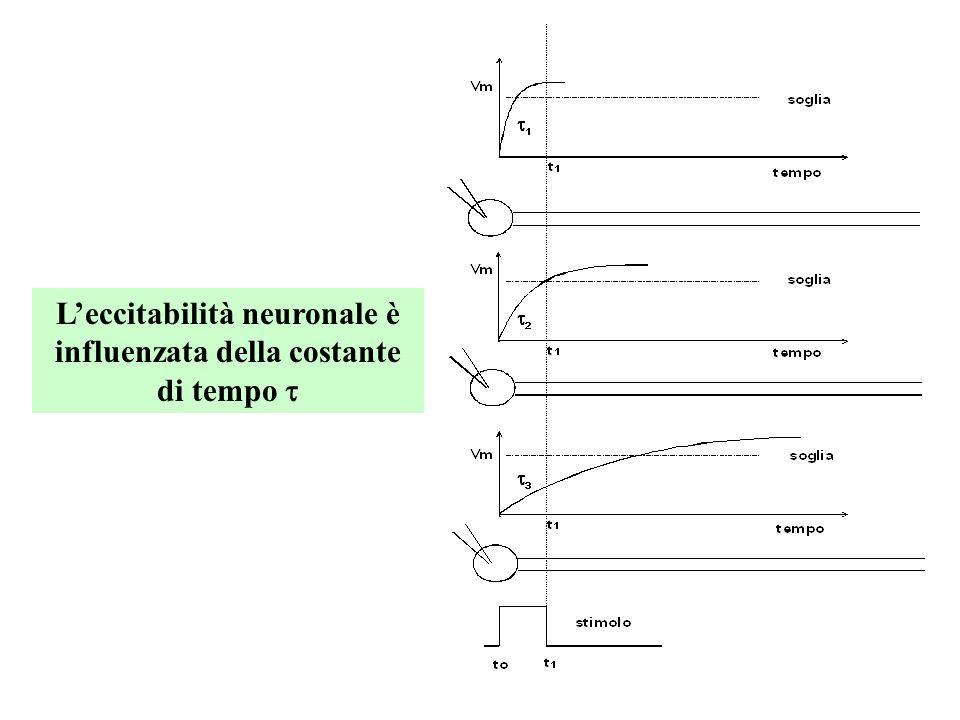 Sclerosi Multipla Demielinizzazione Centrale Perdita di oligodendrociti Gli assoni rimangono relativamente preservati