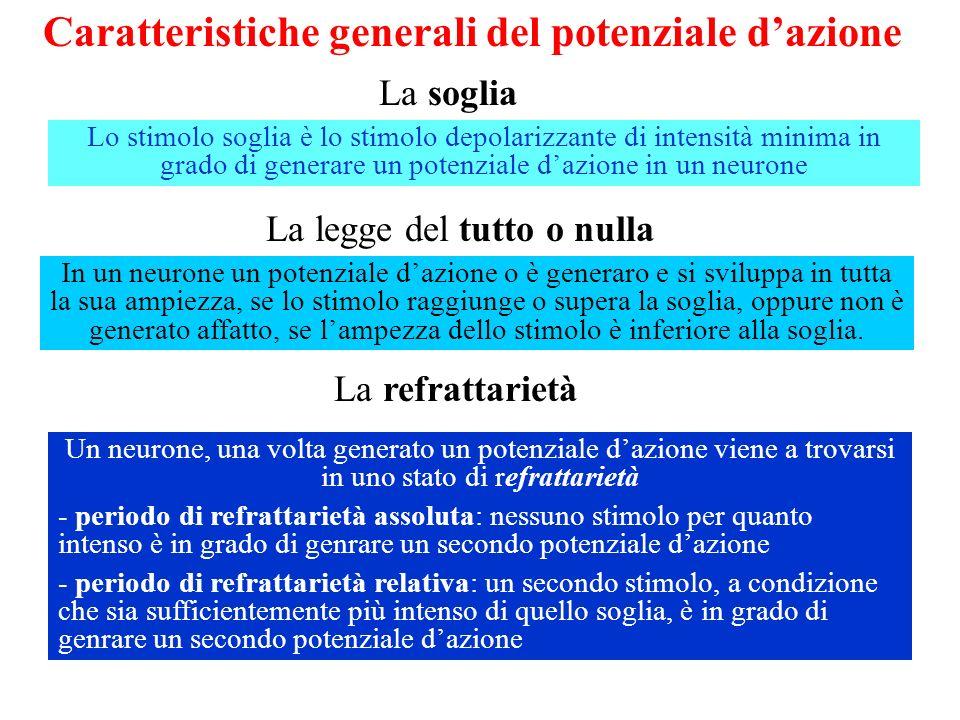 Caratteristiche generali del potenziale dazione La soglia La legge del tutto o nulla La refrattarietà Lo stimolo soglia è lo stimolo depolarizzante di intensità minima in grado di generare un potenziale dazione in un neurone In un neurone un potenziale dazione o è generaro e si sviluppa in tutta la sua ampiezza, se lo stimolo raggiunge o supera la soglia, oppure non è generato affatto, se lampezza dello stimolo è inferiore alla soglia.
