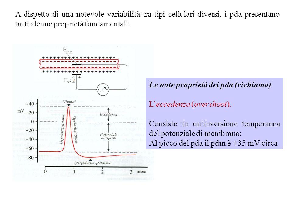 stimolo VmVm Distanza x soglia V1V1 VoVo xoxo x1x1 VmVm Distanza x soglia V1V1 VoVo VmVm Distanza x soglia V1V1 VoVo Leccitabilità neuronale è influenzata della costante di spazio (e quindi dal diametro della fibra)