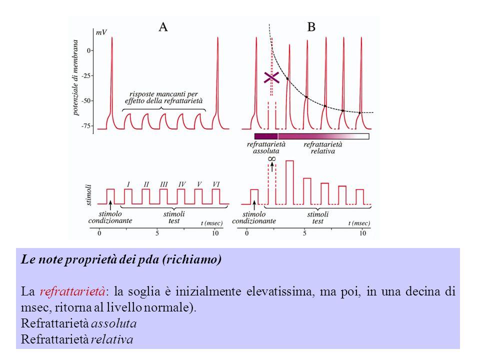 Le note proprietà dei pda (richiamo) La refrattarietà: la soglia è inizialmente elevatissima, ma poi, in una decina di msec, ritorna al livello normale).