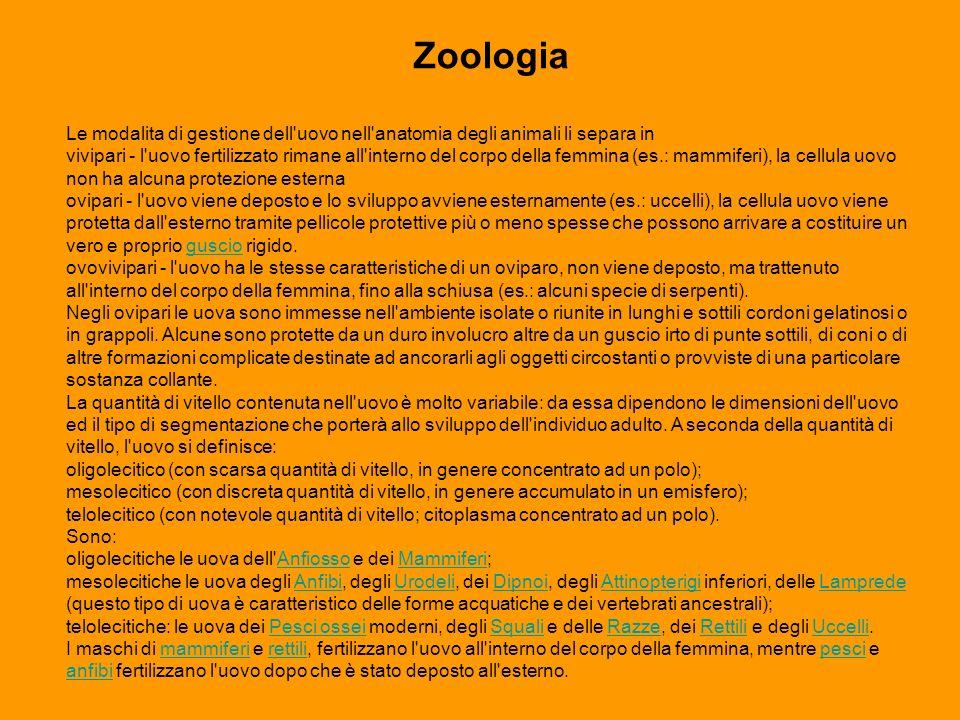 Zoologia Le modalita di gestione dell'uovo nell'anatomia degli animali li separa in vivipari - l'uovo fertilizzato rimane all'interno del corpo della
