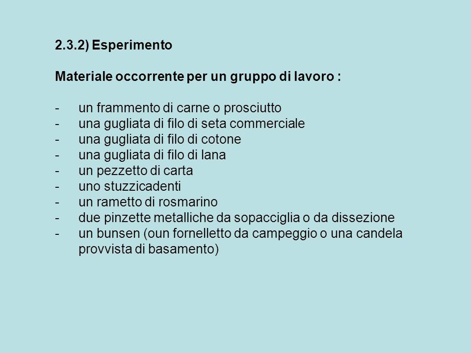 2.3.2) Esperimento Materiale occorrente per un gruppo di lavoro : -un frammento di carne o prosciutto -una gugliata di filo di seta commerciale -una g