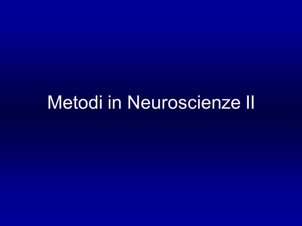 Metodi in Neuroscienze II
