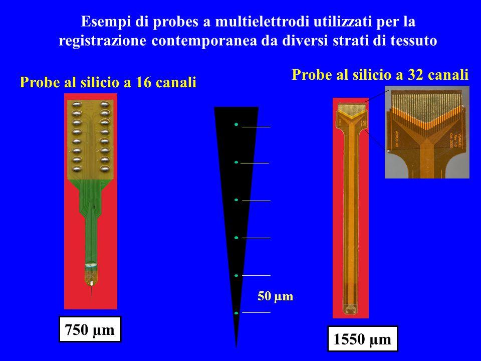 50 µm Probe al silicio a 16 canali Probe al silicio a 32 canali 750 µm 1550 µm Esempi di probes a multielettrodi utilizzati per la registrazione conte