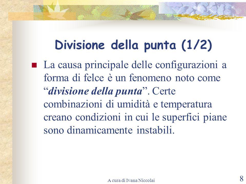 A cura di Ivana Niccolai 8 Divisione della punta (1/2) La causa principale delle configurazioni a forma di felce è un fenomeno noto comedivisione dell