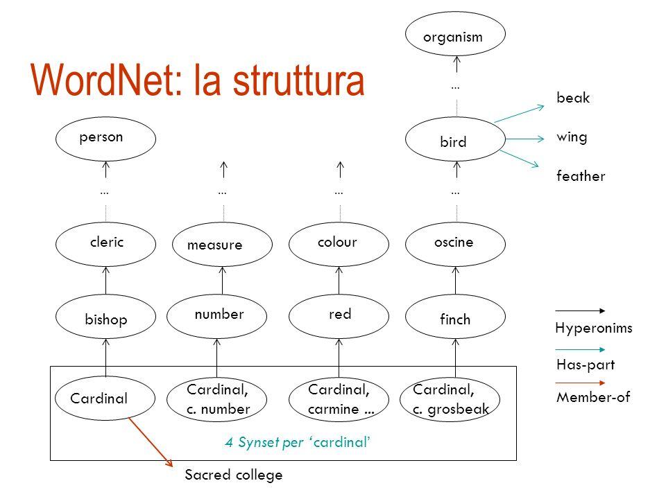 WordNet [Miller] Grossa risorsa lessicale organizzata a rete semantica (122.000 termini) i nomi, i verbi, gli aggettivi, gli avverbi sono organizzati