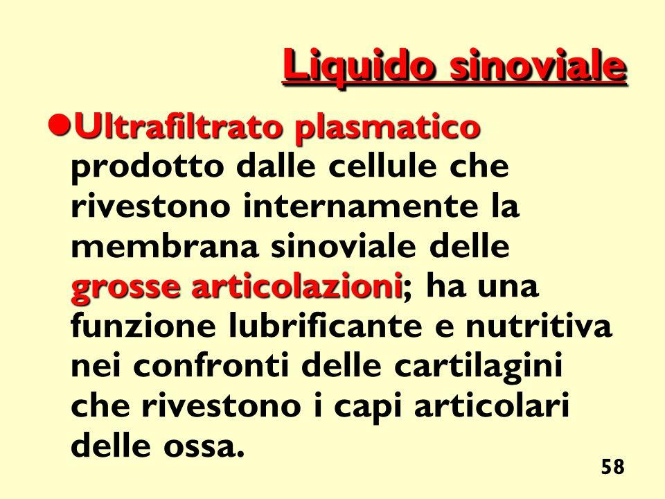 58 Liquido sinoviale Ultrafiltrato plasmatico grosse articolazioni Ultrafiltrato plasmatico prodotto dalle cellule che rivestono internamente la membr