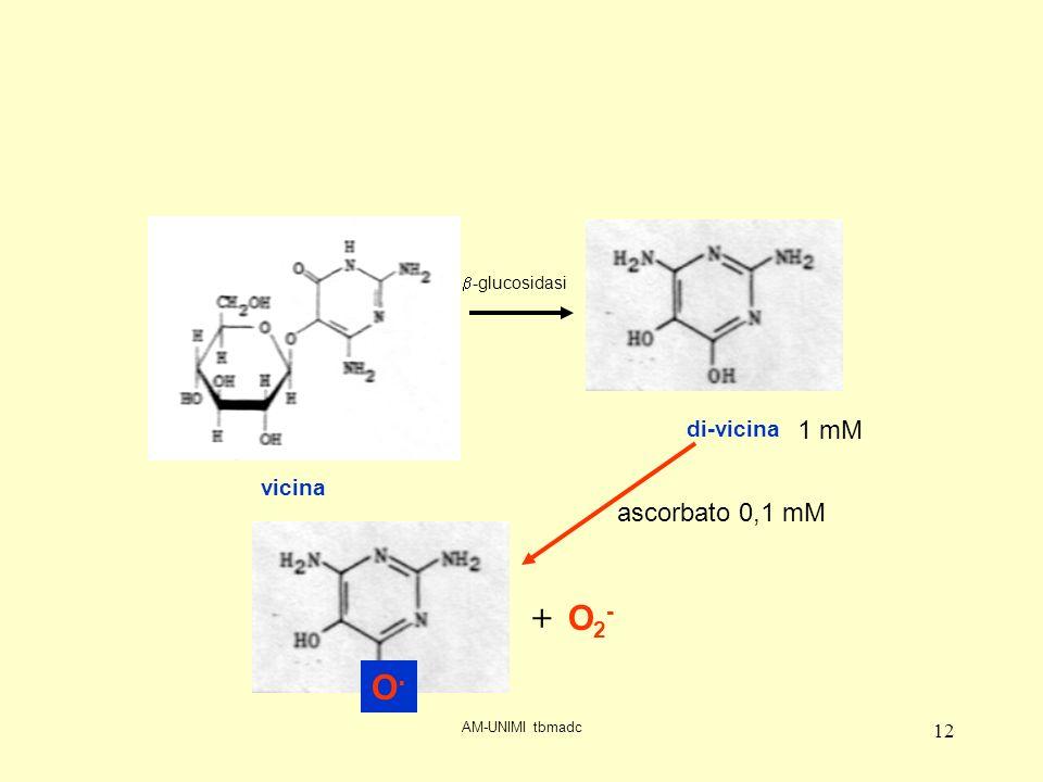 AM-UNIMI tbmadc 12 vicina di-vicina -glucosidasi O.O. + O2-O2- ascorbato 0,1 mM 1 mM