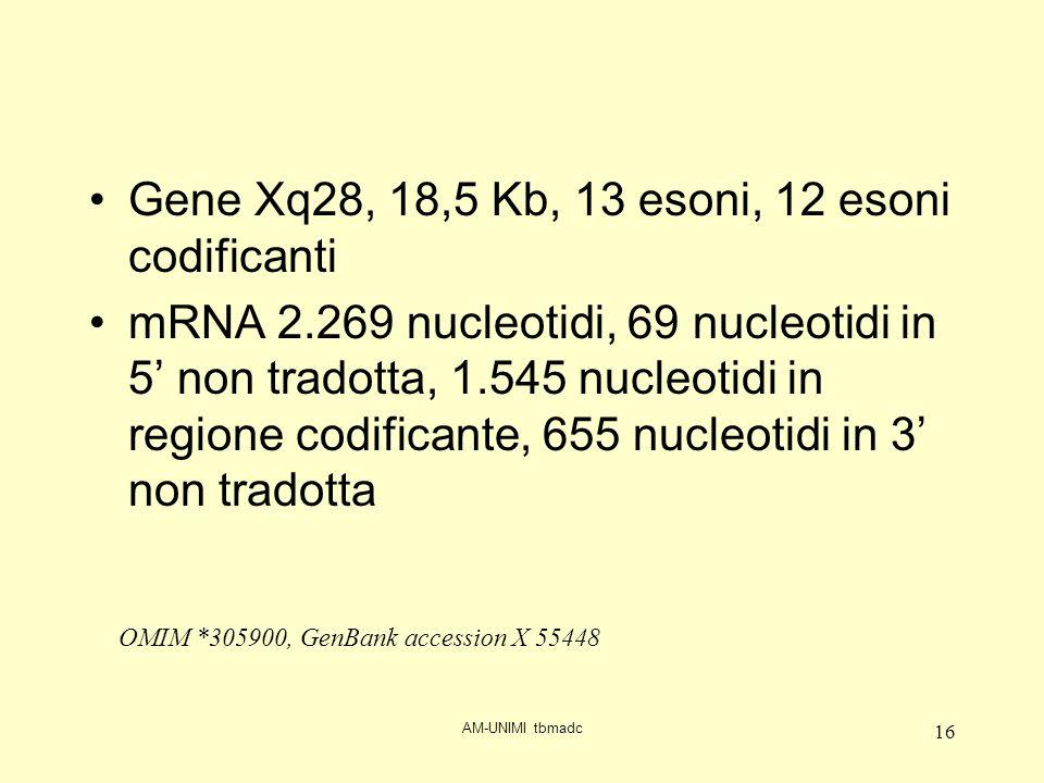 AM-UNIMI tbmadc 16 Gene Xq28, 18,5 Kb, 13 esoni, 12 esoni codificanti mRNA 2.269 nucleotidi, 69 nucleotidi in 5 non tradotta, 1.545 nucleotidi in regione codificante, 655 nucleotidi in 3 non tradotta OMIM *305900, GenBank accession X 55448