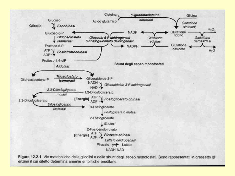 AM-UNIMI tbmadc 23 METODICHE ANALITICHE Spot Test (Fairbanks, Beutler) Test Citochimico (Brewer) WHO (G6PD-6PGD) - Sottrazione - Inibizione DNA (reverse dot-blot, enzimi di restrizione, ARMS, sequenza) mosaicismo, riconoscimento eterozigote intervalli di riferimento determinazione attività dopo crisi emolitica