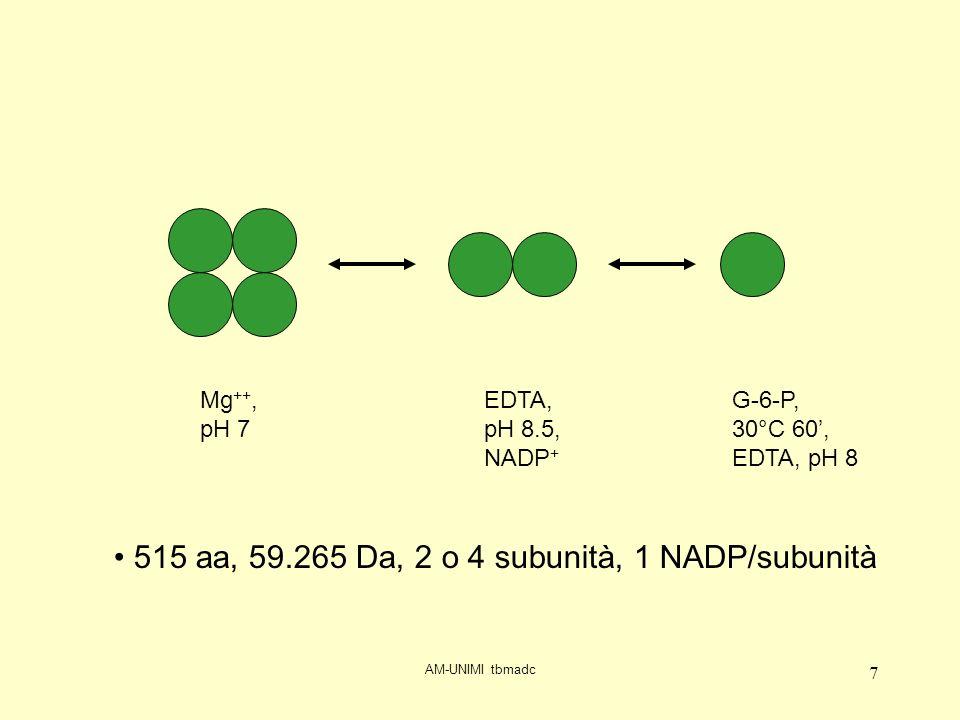AM-UNIMI tbmadc 7 Mg ++, pH 7 EDTA, pH 8.5, NADP + G-6-P, 30°C 60, EDTA, pH 8 515 aa, 59.265 Da, 2 o 4 subunità, 1 NADP/subunità