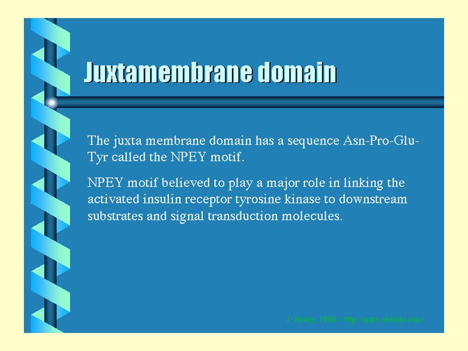 AM-UniMi 52 J. Risley, 1999 - http://opbs.okstate.edu/