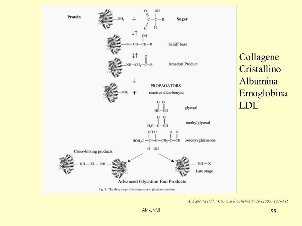 AM-UniMi 58 A. Lapolla et al. / Clinical Biochemistry 38 (2005) 103–115 Collagene Cristallino Albumina Emoglobina LDL