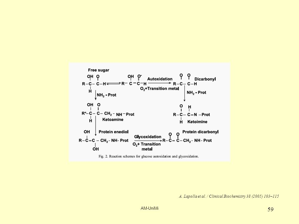 AM-UniMi 59 A. Lapolla et al. / Clinical Biochemistry 38 (2005) 103–115