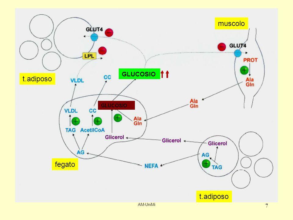 AM-UniMi 78 Tutti i geni di proteine coinvolte nella trasduzione del segnale insulinico sono potenzialmente coinvolti –Mutazioni del recettore –Varianti IRS-1 –Mutazioni PI-3 chinasi (?) –Ridotta attivazione della via IR/IRS/PI3K Mutazioni di altri fattori (PPAR 2: peroxisome-proliferator-activated receptor) Riduzione della attivazione della eNOS Insulino-resistenza