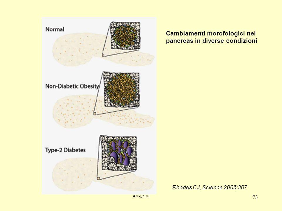 AM-UniMi 73 Cambiamenti morofologici nel pancreas in diverse condizioni Rhodes CJ, Science 2005;307